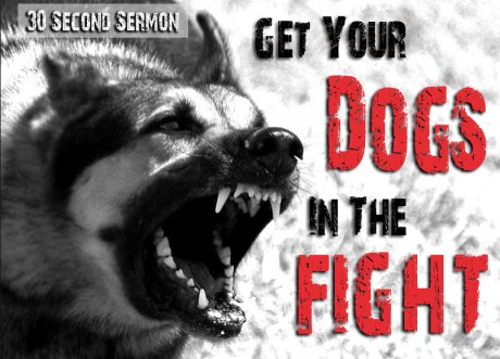 Get your Dogs in the Fight
